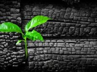 Удобрение из древесного угля